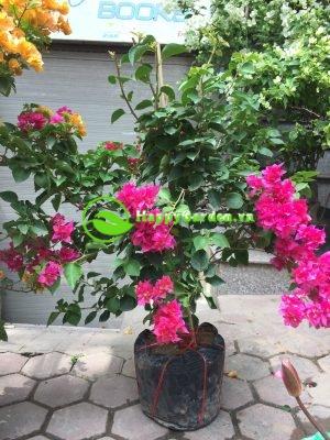 Cây chịu nắng- loại cây không thể vắng bóng trong ngôi nhà bạn