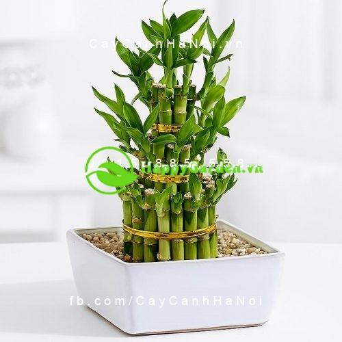 cây Phát Lộc