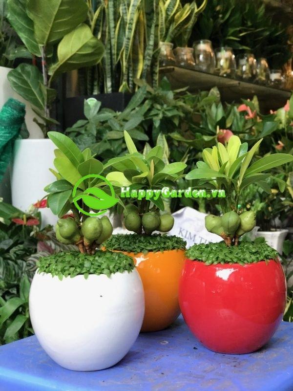 Đâu là mẫu cây trong nhà được ưa chuộng nhất?
