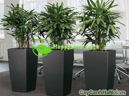 Bật mí địa chỉ cho thuê cây cảnh chất lượng tại Hà Nội
