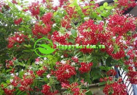 Top mẫu hoa ban công dễ trồng nhất hiện nay